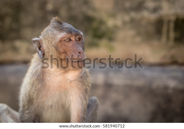 Monkey natural background