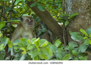 Monkey nestled in a natural leaf and tree surroundings