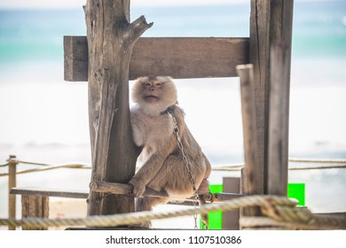 Monkey on the beach in cage sitting on sand
