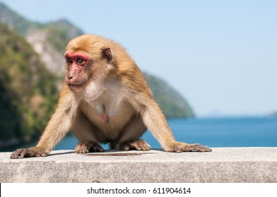 Monkey on the dam wall