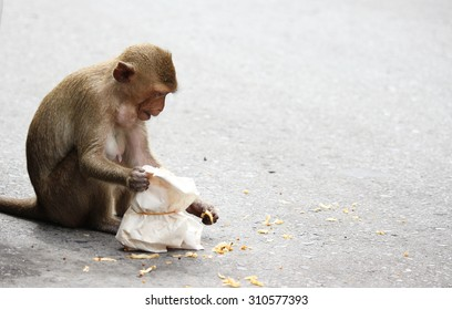 The monkey on the streets eating a peanut in the old town ,Lopburi central of Thailand