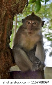 Monkey on a wall in the backpackers village of Tonsai, between Ao Nang and Railay in the Krabi Province, Thailand
