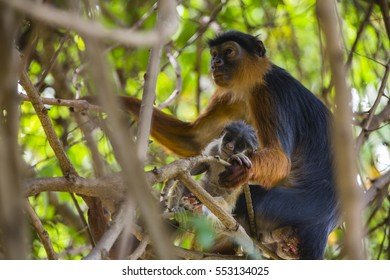 monkey parent and baby