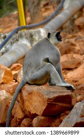 Monkey photo this pic clicked in tirupati