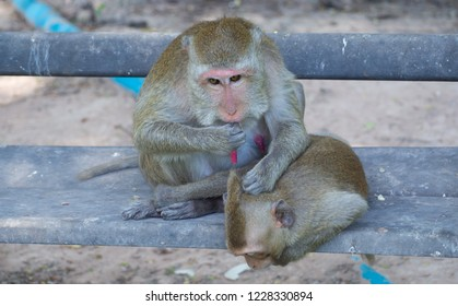 Monkey is playing mischievous in the park.