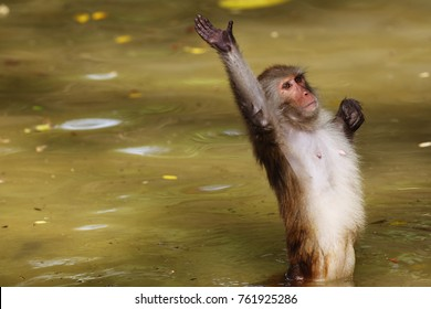 Monkey in the pound waving