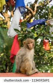 Monkey and prayer flags from Swayambunath temple in Kathmandu. Religion in Nepal