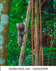 Monkey Primate Florest