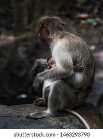 A monkey protects her scared baby.