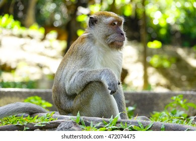 monkey relaxing in forest with blurry background,select focus with shallow depth of field.