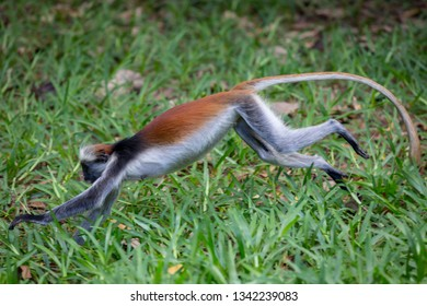 monkey run on grass surface in forest