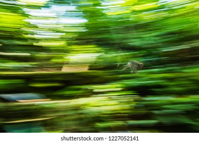 A monkey runs through the forest in Bali, Indonesia
