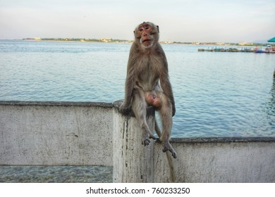 Monkey seated on the seaside
