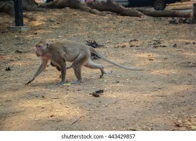 monkey, selective focus, blur