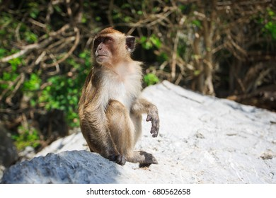 monkey sit on rock (focus on monkey's face)