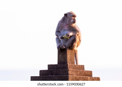 monkey sit on statue in bali
