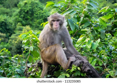 Monkey sit on the tree in african jungle