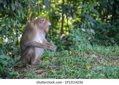 Monkey sitdown in side forest