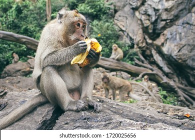 Monkey sits on a rock and eats banana