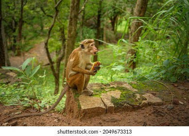 Monkey sitting with banana in hand