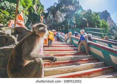 Monkey sitting at Batu Cave, hindu temple in Kuala Lumpur, Malaysia