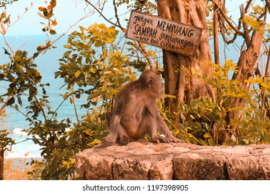 A monkey sitting below a tree in Bali