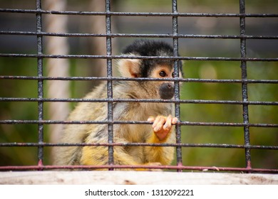 Monkey is sitting in a cage in the zoo.