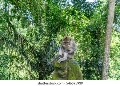 monkey are sitting in the monkey forest at Ubud, Bali