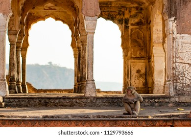 A monkey is sitting in front of the Monkey Temple (Galtaji)  at sunset. Jaipur, India.