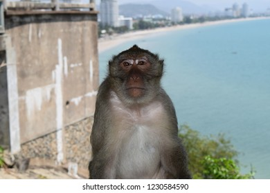 Monkey sitting in front of you. The background is sea beach, Hua Hin, Thailand.