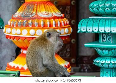 monkey sitting on the bin of Batu Cave sitting at temple golden statue of Lord Muragan at Hindu shrine, Kuala Lumpur.