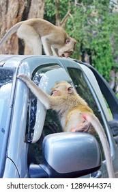 monkey sitting on the glass car