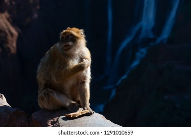 Monkey sitting on the parapet with Ouzoud waterfalls on the background, Morocco