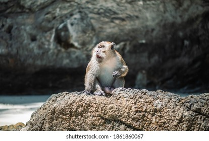 Monkey sitting on the rock in Island