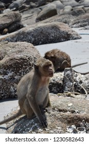 Monkey sitting on the rocks on the beach.