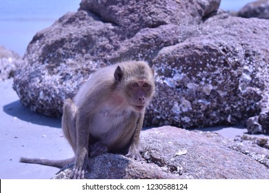 Monkey sitting on the rocks on the beach. blue color. In Hua Hin, Thailand.
