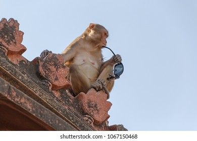 monkey sitting on roof of temple in Vrindavana, India