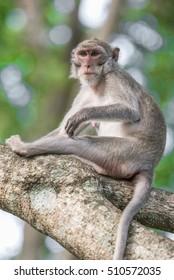 Monkey sitting on a tree.blurred background