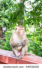 Monkey sitting on the wall
