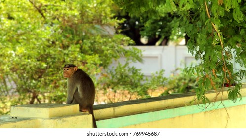 A monkey sitting on a wall  in the morning.