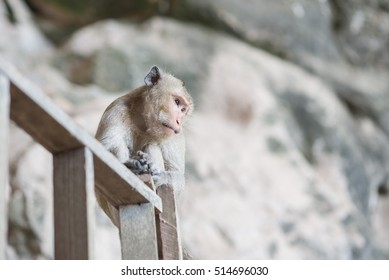A monkey is sitting on the wood handrail.