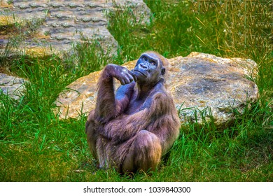 Monkey sitting and thinking