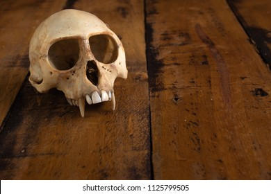 Monkey skull on stained wooden pallet