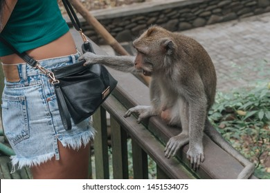 the monkey steals from the bag