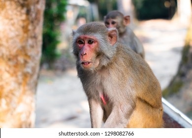 Monkey survey is found absolutely necessary in the world. No foods are last for them. Please feed them. They are our natural resources. They are located at Modhupur National Park in Bangladesh.