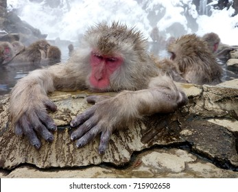 Monkey taking it easy and relaxing in the hot spring at Jigokudani Monkey Park, Japan