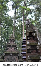 The monkey temple in Sangeh, island of Bali - Indonesia. There's a lot of monkeys for sure! Pic was taken in January 2016.
