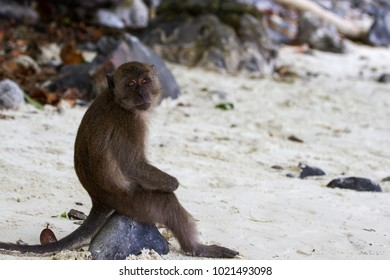 Monkey from Thailand