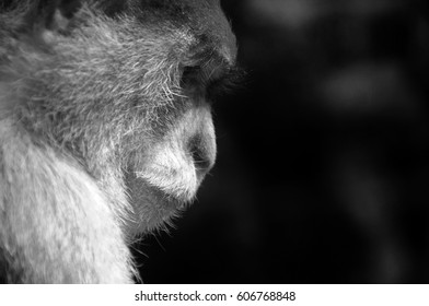 A monkey is thinking