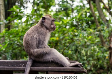 Monkey thinking away
